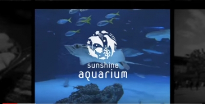 Penguin NAVI - Sunshine Aquarium