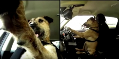 "MINI / SPCA ""Driving Dogs"""