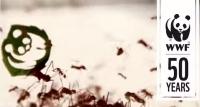 WWF Ant rally